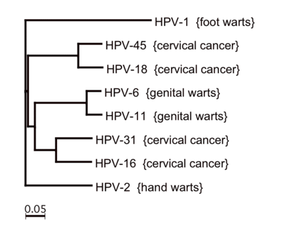 virus hpv tratamento natural papilloma of tonsil treatment