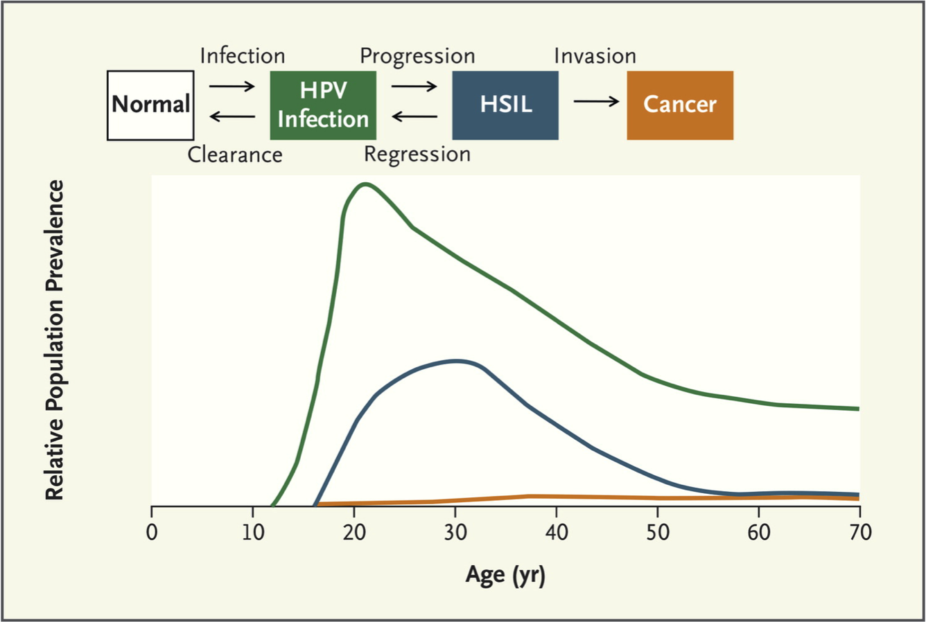 difference between human papillomavirus and cancer