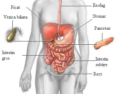 ficat si pancreas anthelmintic meaning in medical