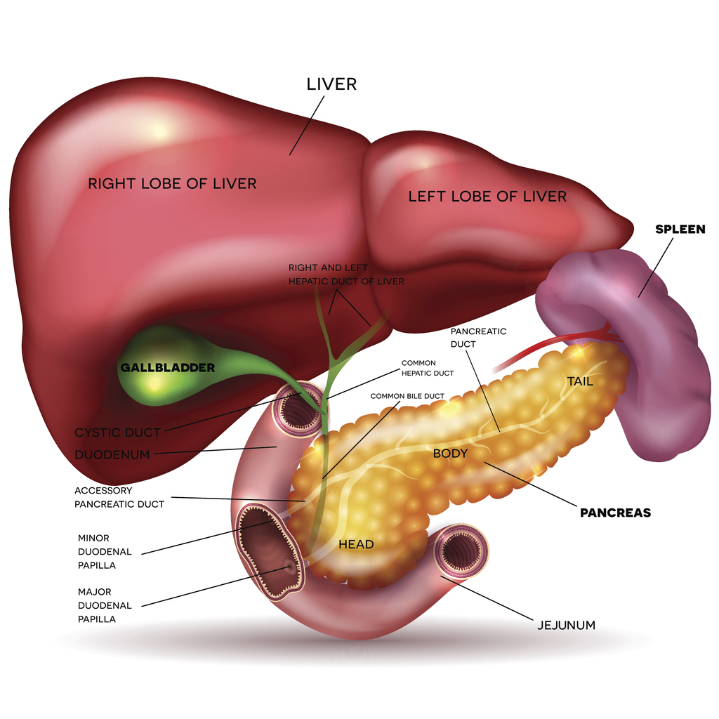 neuroendocrine cancer of the pancreas and liver