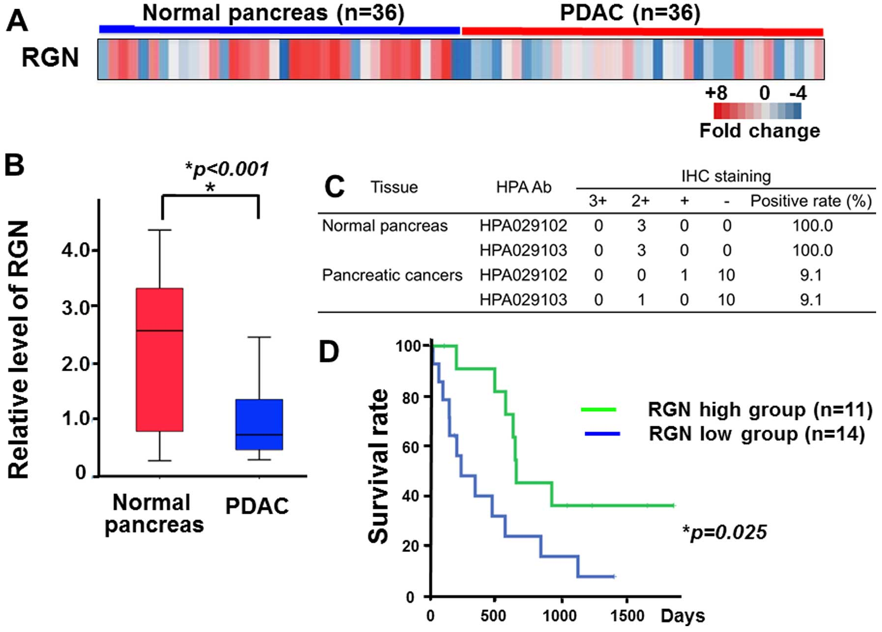 pancreatic cancer gene