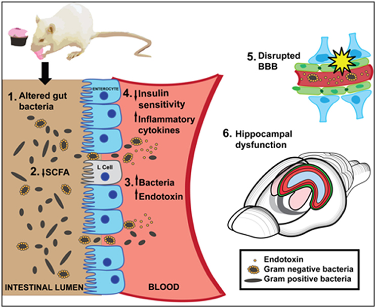 dysbiosis a review highlighting obesity and inflammatory bowel disease gardasil vaccine information
