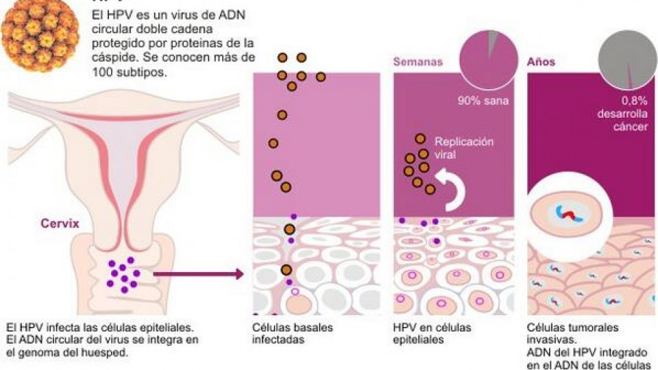 hpv que es herpes hpv and testicular cancer