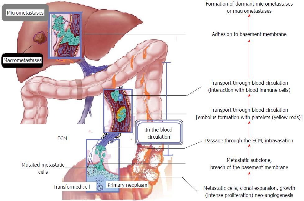 Survival In A Cohort Of Patients With Rectal Cancer Rectal Cancer With Metastasis